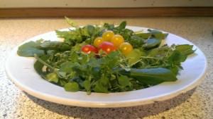 Fuglegræs forrest i skålen. I startdecember var der stadig tomater fra drivhuset modnet i vindueskarmen. Mums!
