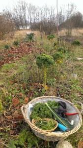 Rosenmarken d. 21. december - med rødkål til jul